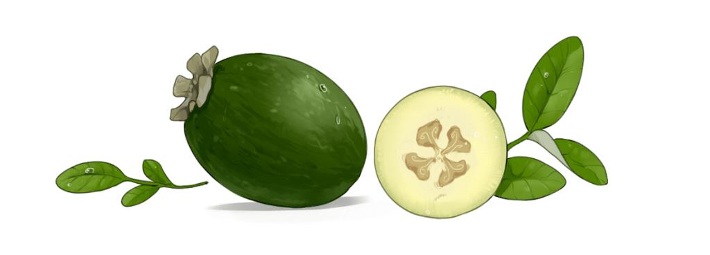 Owoc Feijoa