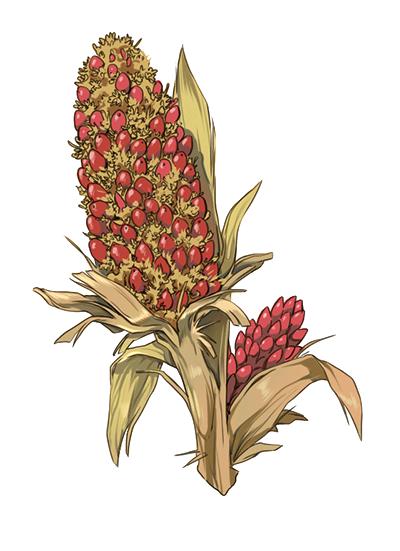 Kwiat zalacca